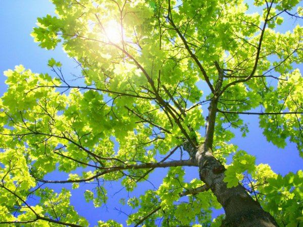 2. Ağacım