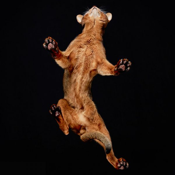 25-photos-of-cats-taken-from-underneath-12__880