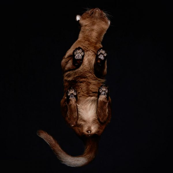 25-photos-of-cats-taken-from-underneath-18__880