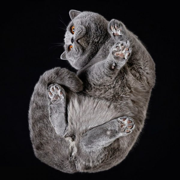 25-photos-of-cats-taken-from-underneath-21__880