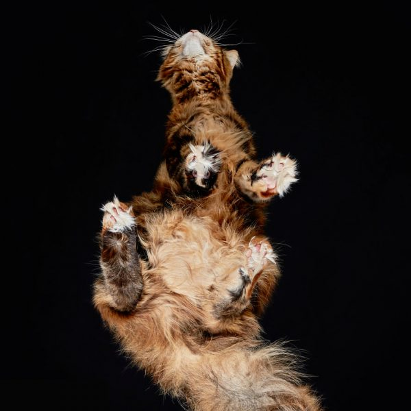 25-photos-of-cats-taken-from-underneath-27__880