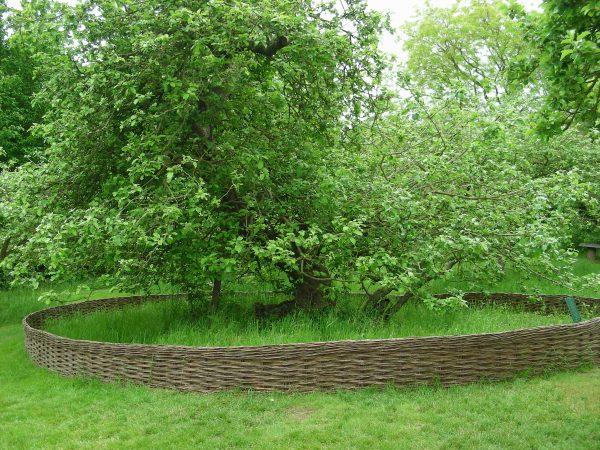 6-newtons-apple-tree