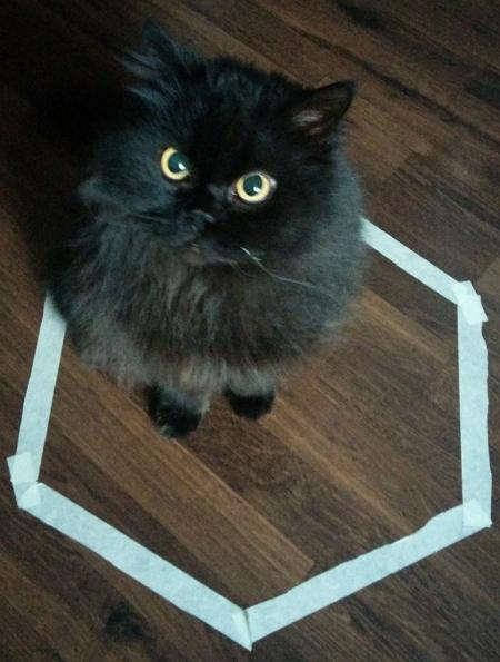 Cat-circle-1