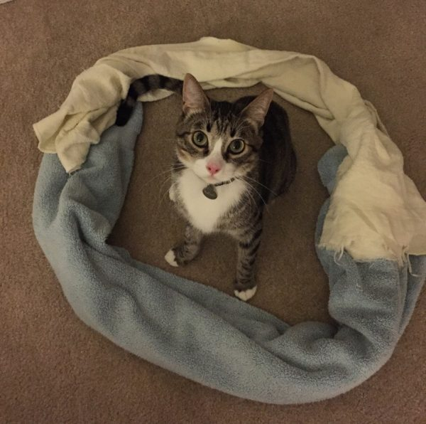Cat-circle-3