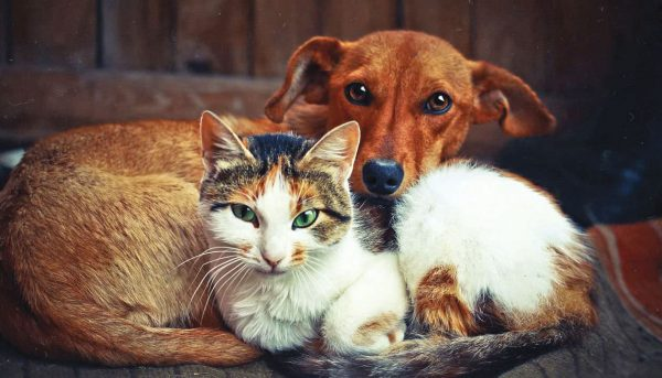 STRAY-DOGS-CATSCo-Exist-with-People-in-Sri-Lanka