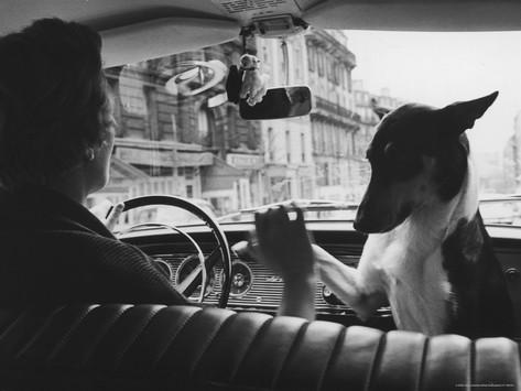 alfred-eisenstaedt-woman-taxi-driver-sharing-front-seat-with-pet-dog