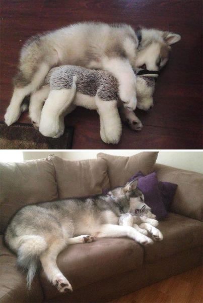 animals-sleeping-cuddling-stuffed-toys-163-58f0aec0bff8e__605