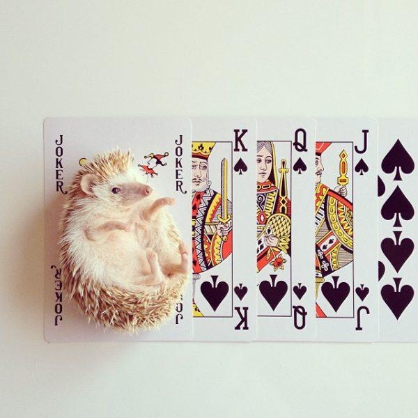 cutest-hedgehog-ever-4