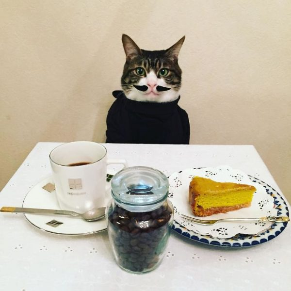 dining-with-dressed-cat-maro-japan-22-58f46ae9bced2__700