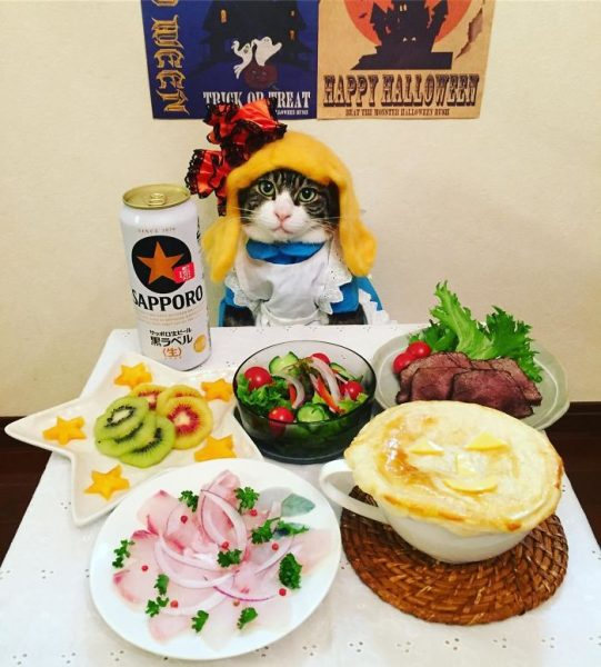 dining-with-dressed-cat-maro-japan-24-58f46aed6e0b5__700