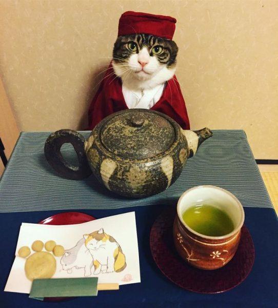 dining-with-dressed-cat-maro-japan-28-58f46af60c909__700