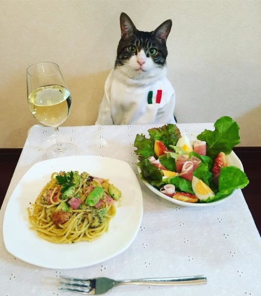 dining-with-dressed-cat-maro-japan-30-58f46afa12a6a__700