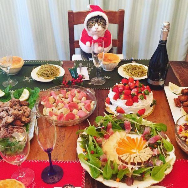dining-with-dressed-cat-maro-japan-35-58f46b07377e9__700