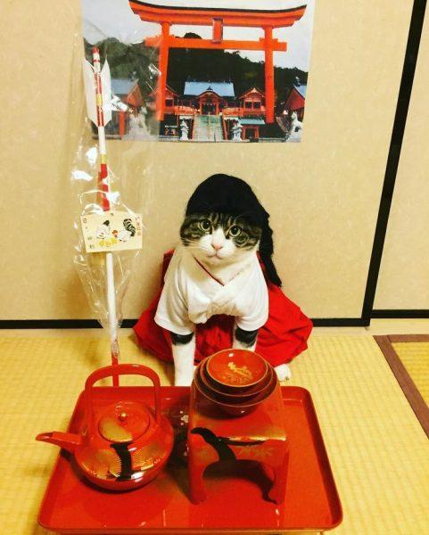 dining-with-dressed-cat-maro-japan-37-58f46b0c2cf01__700