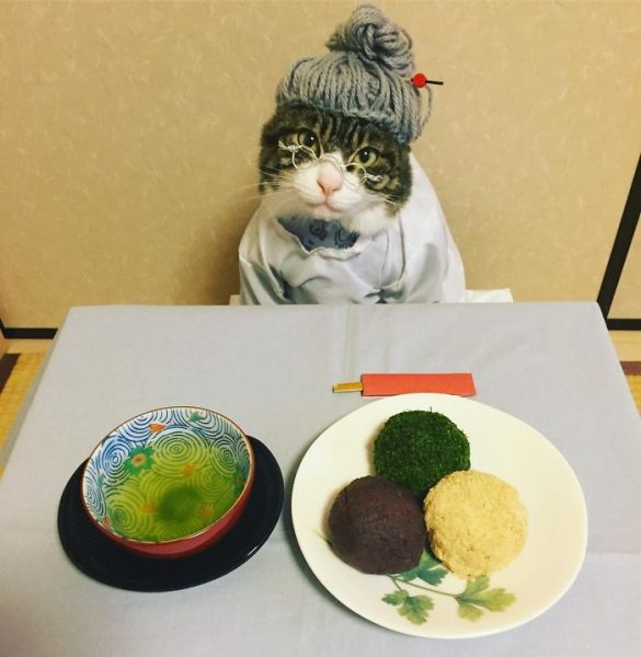 dining-with-dressed-cat-maro-japan-52-58f46b2d020d8__700
