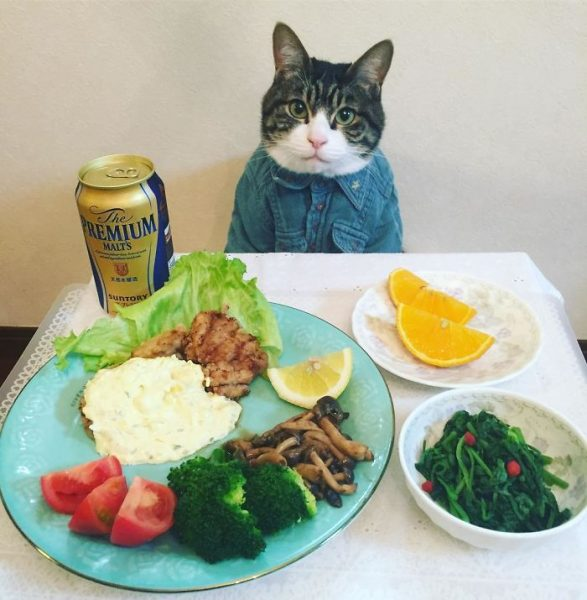 dining-with-dressed-cat-maro-japan-54-58f46b308aa18__700