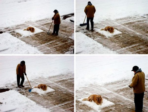 funny-animals-who-dont-give-a-damn-2-58e20f9ceba66__700
