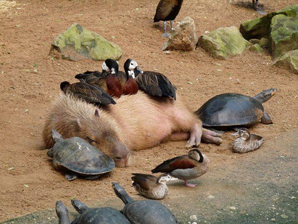 funny-animals-who-dont-give-a-damn-36-58e4999eaeb9e__700