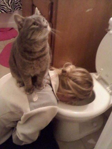 funny-animals-who-dont-give-a-damn-44-58e4d50949a19__700
