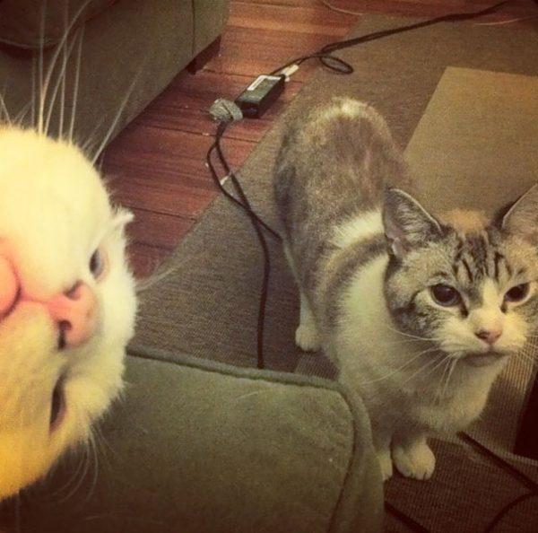 funny-cat-photobombs-38-58e39a833d791__605