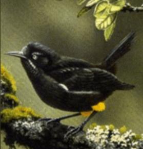 kauai-bird-ds-3