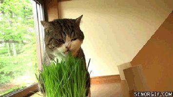 maru-cat-grass-gap