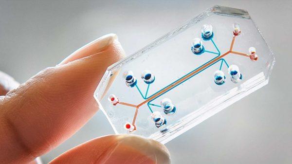 organ-chip-A-human-lung-on-a-chip.