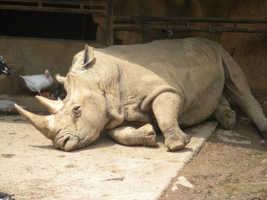 sad-rhino
