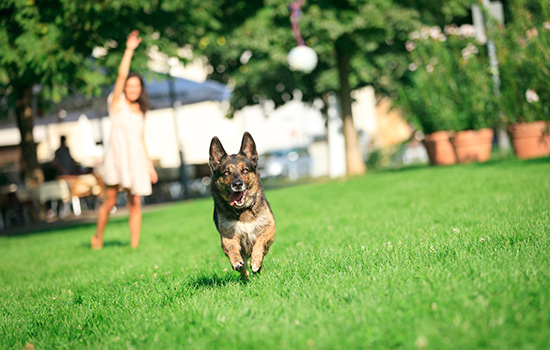 safe-outdoor-play-for-pets
