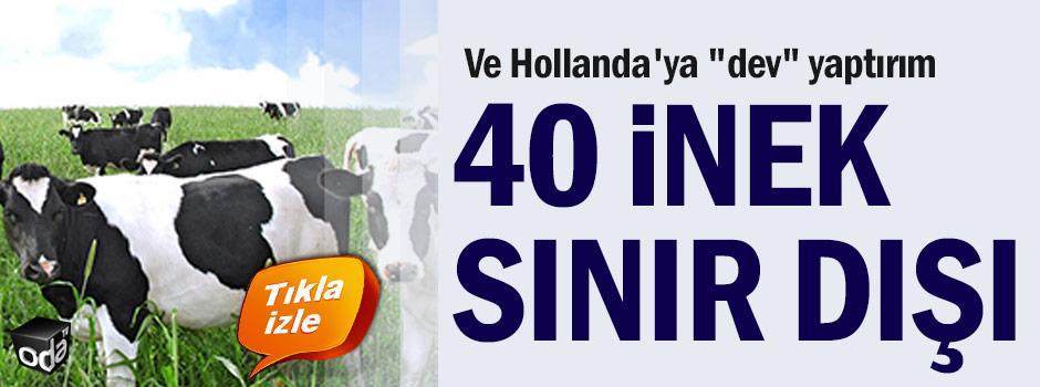 ve-hollandaya-dev-yaptirim-40-inek-sinir-disi-1503171200_m2