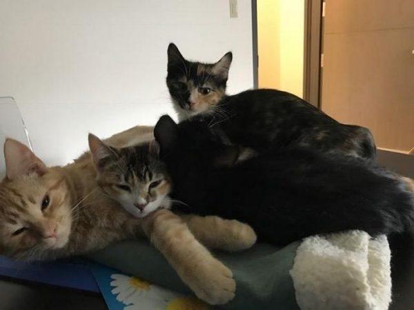 vet-office-cat-calms-patients-ron-1