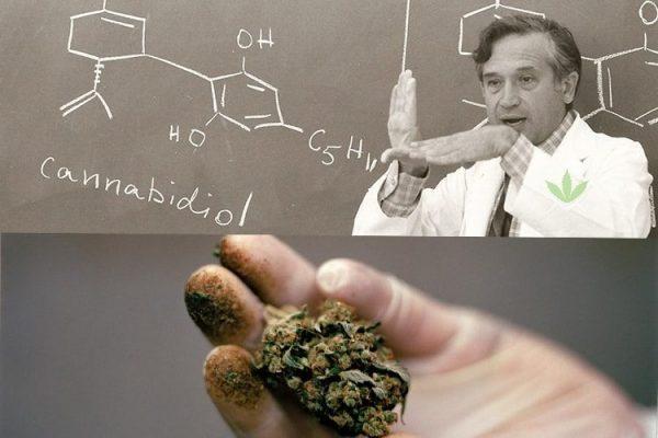 12-reasons-israel-leader-cannabis-research-development-1