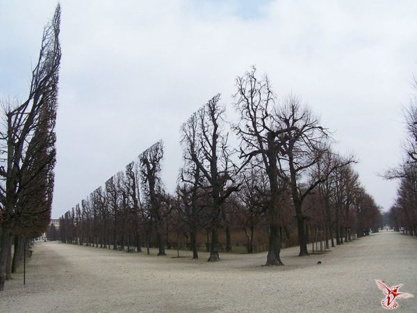 18-Trees-in-Schonbrunn-Park