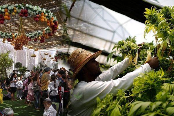 4-reasons-israel-leader-cannabis-research-development-4