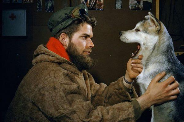 Bir-adam-10-aylık-Alaskan-Malamute-köpeğinin-dişlerini-kontrol-ediyor-Güney-Kutbu-1957