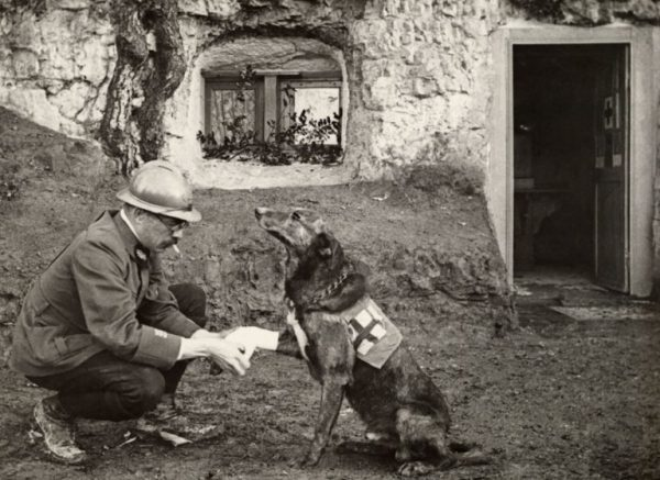 Bir-asker-İlkyardım-köpeğini-tedavi-ediyor-Birinci-Dünya-Savaşı-1917