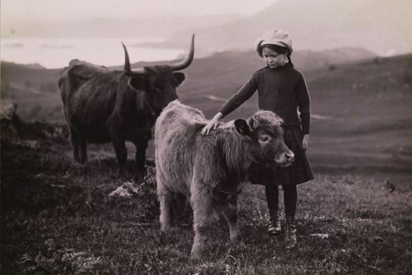 Bir-buzağıyı-seven-kız-İskoçya-1918