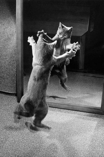 Bir-kedi-1964