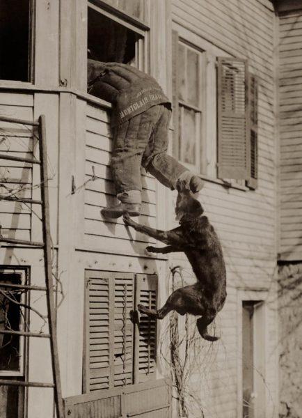 Bir-polis-köpeği-eğitimde-1919.
