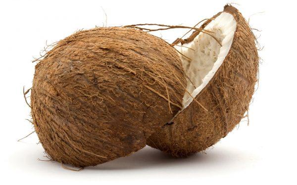 Coconut (1)