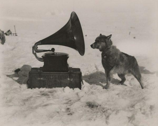 Gramofon-dinleyen-bir-köpek-Güney-Kutbu-1911