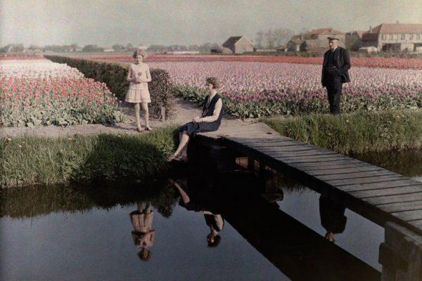 Lale-Bahçeleri-Hollanda-1931