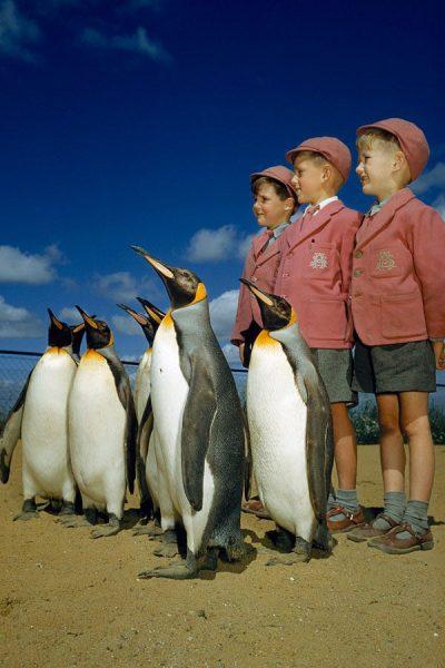 Londra-Hayvanat-Bahçesinde-penguenler-ve-çocuklar-1953