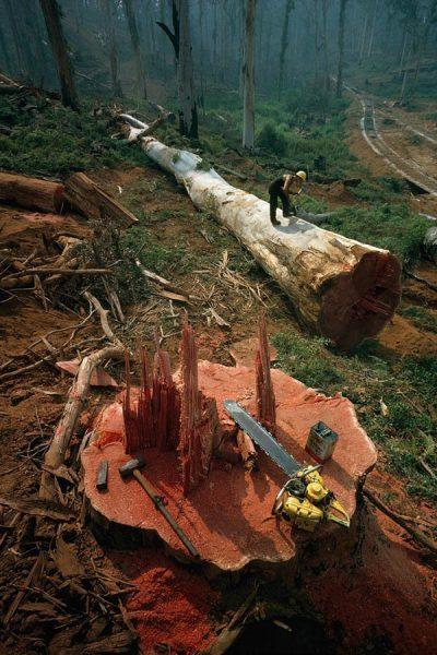 Ormancı-Avustralya-1962
