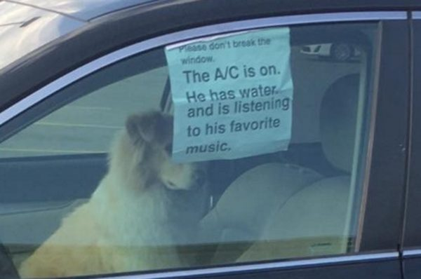 dog-in-parked-car
