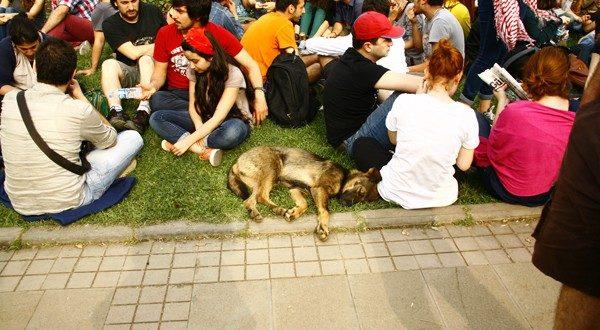 gezi_parki_hayvanlar (5)
