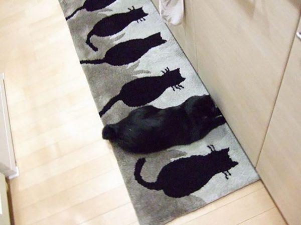 kedi-13