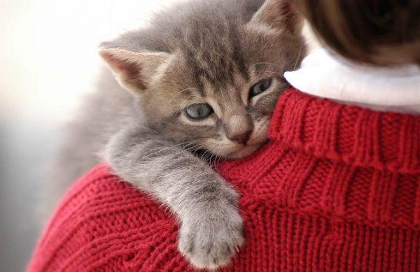 kedi_kucaklayici (5)