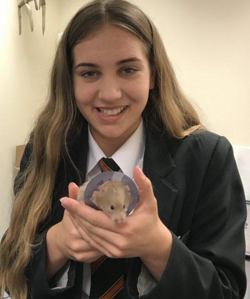lavender_hamster (7)