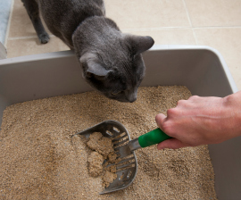 squeak-watches-litter-cleaning